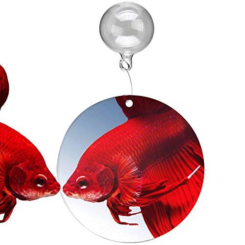 "SunGrow Betta Mirror, 2.3"" Round Mirror with 1"" Floating Ball to Hang, 4""-6"" Clear Line..."