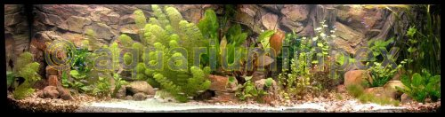 3D Aquarien Rückwand 120×60 Fels mit Wurzel - 5