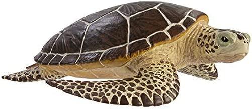 miniature sea turtles for sale