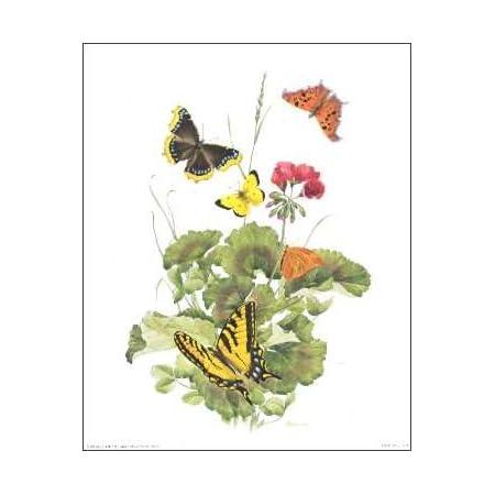 Peony /& Butterflies Paper Tole 3D Kit 8x10