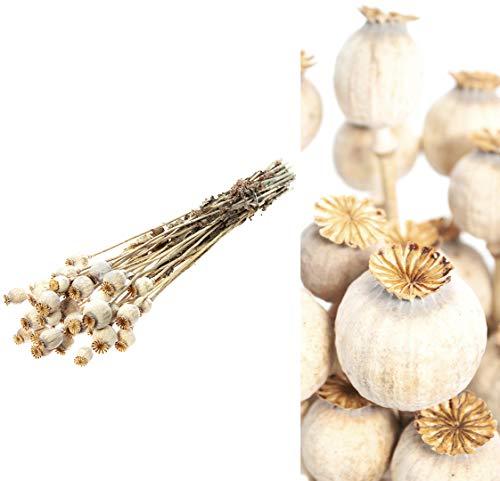 Mohnkapseln getrocknet im Bund - Mind. 15 Stiele - Echte Trockenblumen Natur - Deko für die Vase