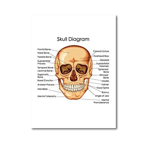 WANGHH Menselijke anatomie schedeldiagram poster dokterspraktijk muurkunst decor canvas afdrukken medische opleiding diagram van de biologie kunst schilderij 42x60 cm geen lijst