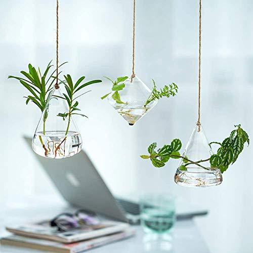 Juego de 3 jarrón de cristal hidropónico colgante para plantas acuáticas, maceta geométrica,...