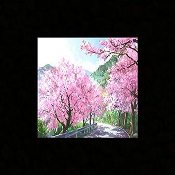 Sakura (Novacane)