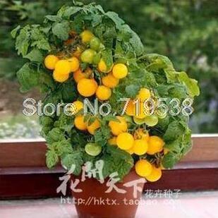 Un pack 100 pcs Varity tomates cerises semences Fruits semences Balcon légumes en pot Bonsai Plante en pot Graines de tomate 12