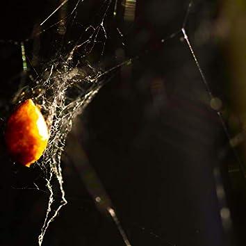 Spider Venom: Transient Traps