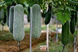 Winter Melon (100PCS Seeds) Wax Gourd Hairy Round Tong Garden Vegetable Organic Chinese Green Herb Seeds or Planting Outdoor for Cooking Dish Soup