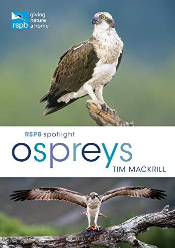 RSPB Spotlight Ospreys (English Edition)