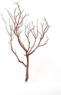 Koyal Wholesale Real Manzanita Branches, 12-Inch, Natural Brown