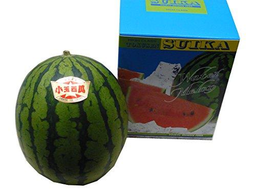 鳥取県産大栄黒こだますいか 2L1玉 東洋フルーツ(有)