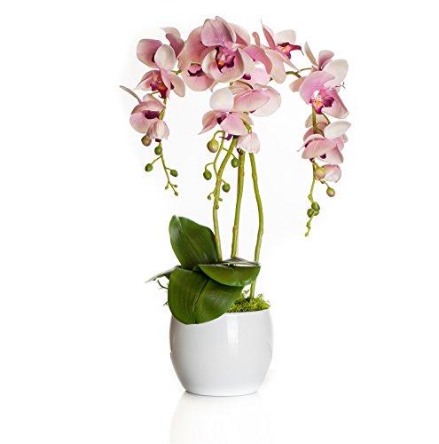 First Künstliche Orchideen im Keramik Topf | weiß - pink - grün/rosa | Höhe: ca. 50cm / Breite: 30cm