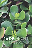 Jade Plant Notebook: Crassula Ovata Tree Journal For Writing and Journaling