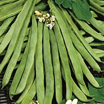SANHOC Graines Paquet: SeeKay Runner B Equateur - 35 graines - résistant à la sécheresse - vegetableSEED