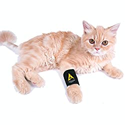Agon-Compression-Protects-Stability-Arthritis/