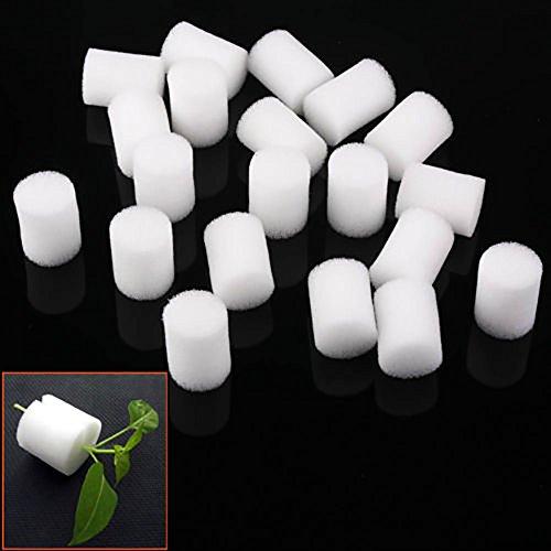 GreenLANS Lot de 20 Colliers de clonage en Mousse hydroponique pour Protection des Racines 25 mm Blanc