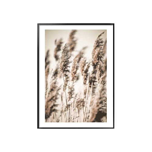 Zartes Schilfrohr-Poster – Botanisch – A5 A4 A3 A2 A1, A4 (21cm x 29.7cm)