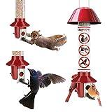 Cardinal Bird Feeders