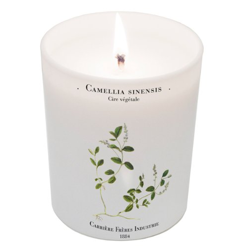 Camellia Sinensis (Tea Plant) Candle 6.7oz candle by Carriere Freres Industrie