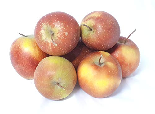 Äpfel Rubinette sehr ähnlich wie Cox Orange vom Bodensee süß- säuerlicher Apfel 1-10 KG (1)