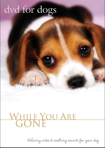 DVD For Dogs: While You Are Gone (Relaxing Dog Video, Dog Movie for Separation Anxiety)