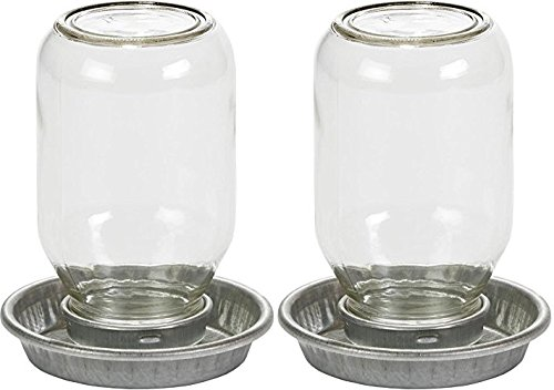 (2 Pack) MILLER 957782 Little Giant Mason Jar Baby Chick Waterer Clear, 1 quart