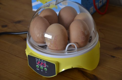 couveuse - Egg Incubator