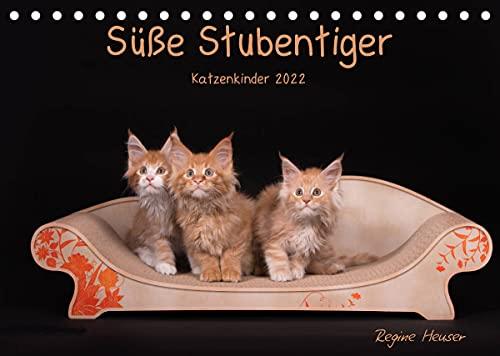 Süße Stubentiger - Katzenkinder (Tischkalender 2022 DIN A5 quer)