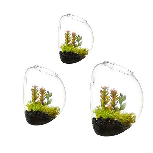 Newdreamworld, set di 3terrari sferici, formati misti, da parete, per interni. Vaso in vetro, acquario, terrario da parete per muschio, vaso per piante grasse, contenitore da parete per piante aeree