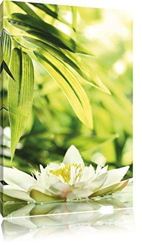 Weiße Seerose im Wasser Wellness , Format: 70x100 auf hochkantiges Leinwand, XXL riesige Bilder fertig gerahmt mit Keilrahmen, Kunstdruck auf Wandbild mit Rahmen, günstiger als Gemälde oder Ölbild, kein Poster oder Plakat