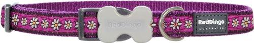 Red Dingo–Collar de Perro, Cadena de Margaritas Morado (15mm x 24–36cm) S