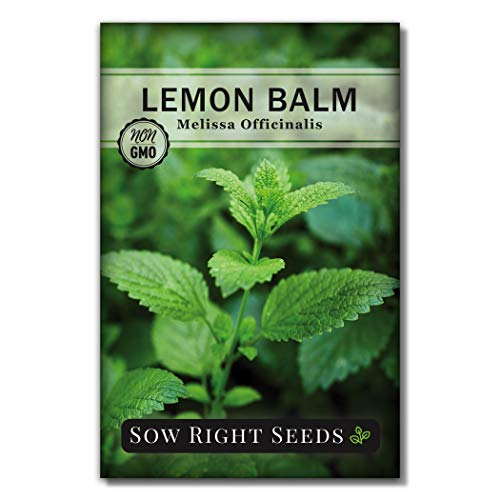 Sow Right Seeds - Lemon Balm Seeds Non-GMO Heirloom Seeds with Full Instructions for Planting an Easy to Grow herb Garden, Indoor or Outdoor; Great Gardening Gift (1)