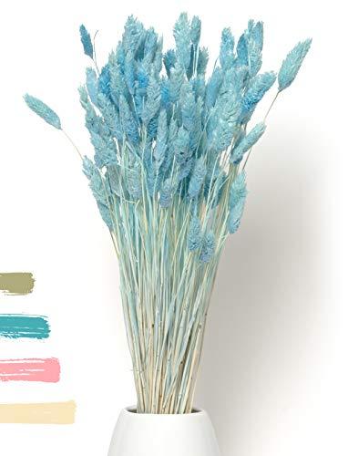 - Phalaris als Trockenblumen EIN Hingucker - Trockenblumen Deko ewig haltbar - Pampasgras & getrocknete Blumen Pampasgras getrocknet Pampasgras Deko Trockenblumenstrauß Vase Deko (Türkis)