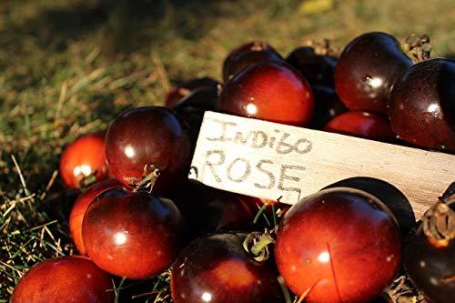 Portal Cool Indigo Rose Tomatensamen - 100 Seeds - Black - Blue Tomato - Erstaunlich - Ungewöhnliche