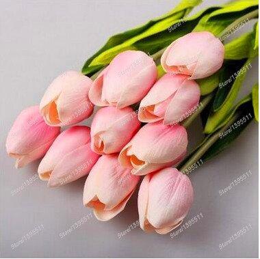 2 ampoules vrai bulbes de tulipes, fleur de tulipe, (pas tulipe graines), bulbes de fleurs, de plantes en plein air, la croissance naturelle, bonsaï pot pour la maison jardin