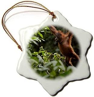 Dozili Christmas Decoration Primates Orangutan Pongo Pygmaeus Swinging Through The Trees Sabah Malaysia 3 inch Ceramic Ornaments Merry
