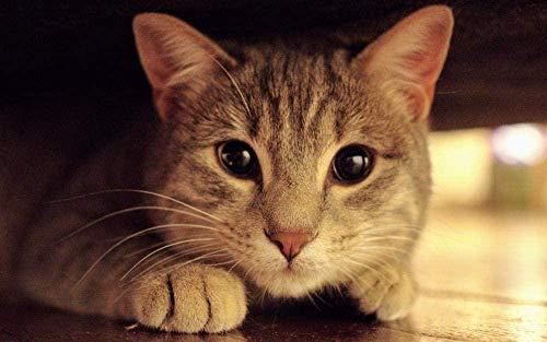 Rompecabezas Adultos 1000 Piezas-Avatar de gato animal (75x50CM) Juego educativo de descompresión para niños-Bricolaje De Juguete Decoración de hogar de arte de regalo