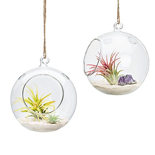 Mkono 6-Inch Hanging Glass Planter Round Air Plant Terrarium Decorations for Succulent, Tillandsia, Candle Holder, 2 Packs
