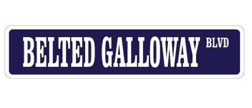 "BELTED GALLOWAY Street Sign belties beef cattle farm farmer   Indoor/Outdoor   18"" Wide Plastic Sign"