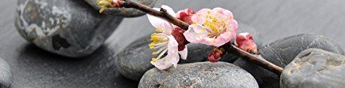 wandmotiv24 Küchenrückwand Blumenast und Steine 240 x 60cm (B x H) - Acrylglas 4mm Nischenrückwand, Spritzschutz, Fliesenspiegel-Ersatz, Deko Küche M0571