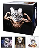 Cat Bods Box- Feline Play Cube with face Cutouts for Funny Poses.