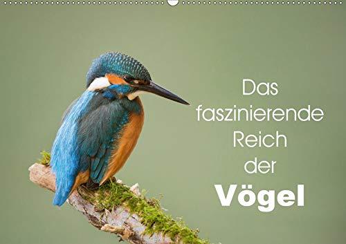 Das faszinierende Reich der Vögel (Wandkalender 2020 DIN A2 quer): An alle Vogelfreunde, lassen sie sich berühren und beigeistern. (Monatskalender, 14 Seiten )