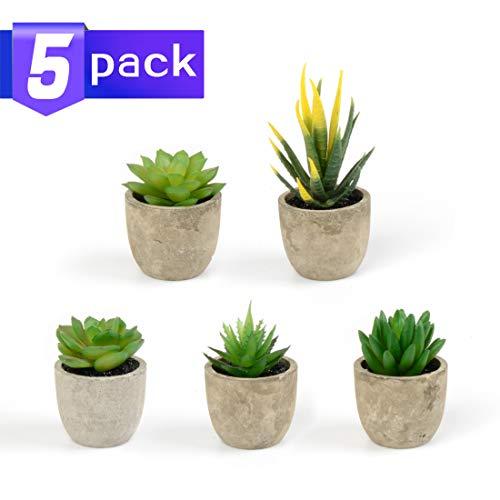 HappyHapi 5 Stück sortierte künstliche Sukkulenten Pflanzen dekorative künstliche Sukkulenten Pflanzen Topfpflanzen künstliche Kakteen Aloe mit grauen Töpfen künstliche Formschnittpflanze Topf