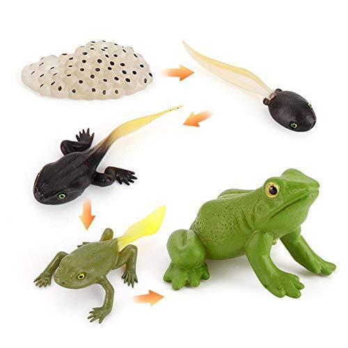 Tammy Yerke Juguete de Figuras de Animales de Ciclo de Vida, Ciclo de Vida para Rana, Hormiga, Mosquito, Tortuga Marina, Pollo, Modelo de Ciclo de Crecimiento Animal de simulación