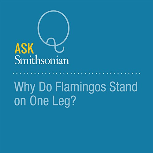 Why Do Flamingos Stand on One Leg? audiobook cover art