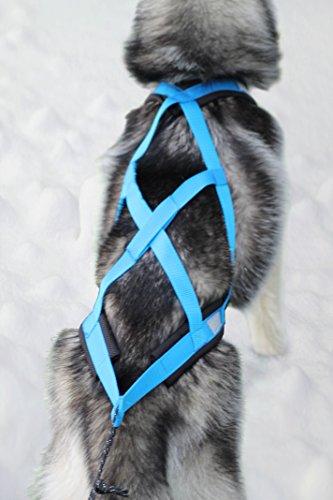 Northern Howl X-Back Zuggeschirr Fuer Bike-, Skijoring Dogscooting Canicross Schlitten in Blau