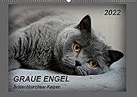 GRAUE ENGEL Britischkurzhaar-Katzen (Wandkalender 2022 DIN A2 quer): Traumhafte Portraetfotos von Britischkurzhaar-Katzen (Monatskalender, 14 Seiten )