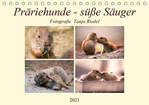 Präriehunde - süße Säuger (Tischkalender 2021 DIN A5 quer)