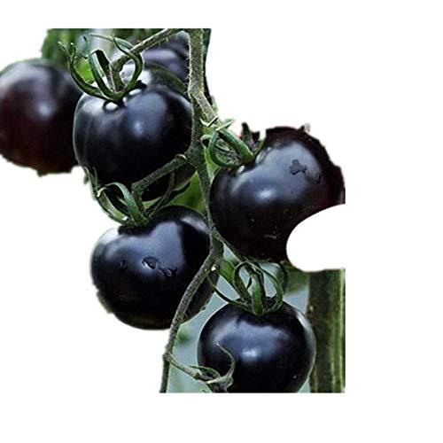 KINGDUO 200Pcs Tomate Graines Jardin Légumes Plantation Noir Jaune Rouge en Pot Bonsai Tomates-Noir