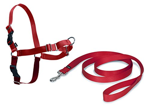 PetSafe Easy Walk Hundegeschirr M rot, 1,8 m Leine, kein Ziehen für mittelgroße Hunde