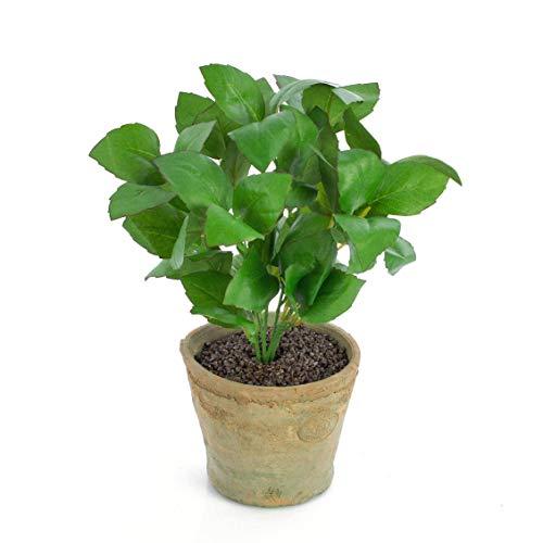 artplants.de Basilico Artificiale LUCANO in Vaso di Terracotta, Verde, 25cm - Basilico Decorativo/Basilico in Vaso
